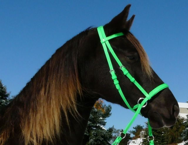 Beta Headstall - Bright Colors