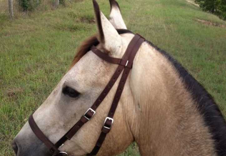 Nylon Bridles